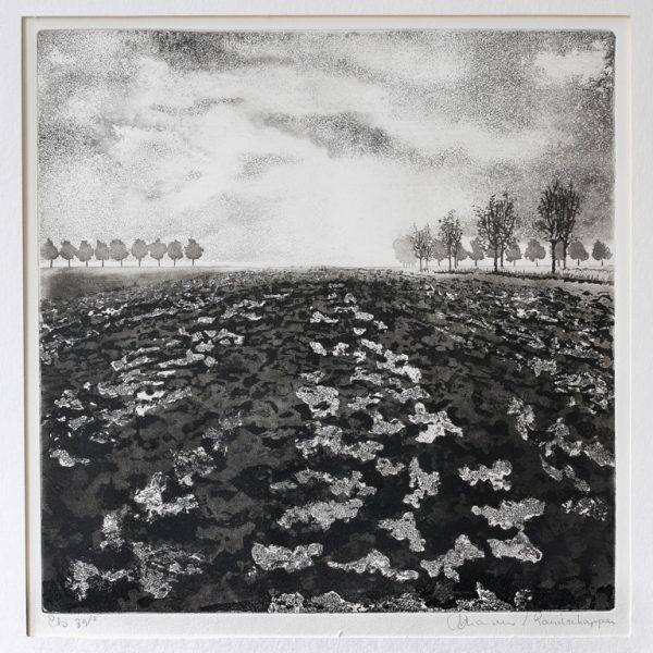title: landscape I  / size: 30 x 30 cm / material: etching